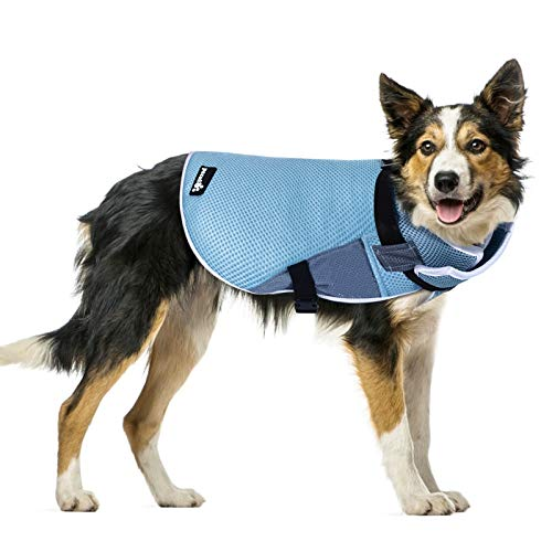 Pecute Chaleco refrigerante para Perros Chaleco de Enfriamiento para Perros y Gatos de Verano Cómodo Transpirable para Mascotas Pequeños, Medianos y Grandes, Apto para Interior y Exterior (XL, Azul)