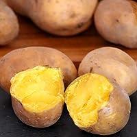 黄金のジャガイモ 北海道産 インカのめざめ10kg 富良野バター付き