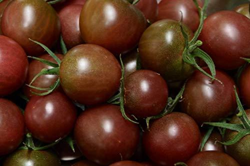 35 Graines de Tomate Cerise Black Cherry - légumes semis potager - méthode BIO