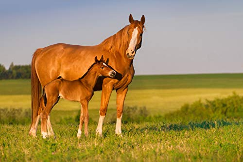 VLIES Fototapete-250x186 cm-PFERDE-(PF4232)-Tiere Pferd Fohlen Pony Natur Strand Gebirge See Wald Wiese Blumen Sonnenuntergang Wandbild Wandtattoo Poster Dekoration
