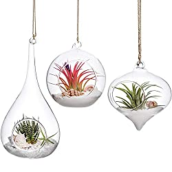 Housewarming-Gifts-for-Men-Hanging-Plant-Terrarium