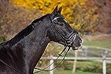 Horse&Passion 920031/11652 Ashley Cabezada de Montar, Negro, Talla única