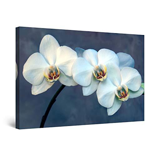 Startonight Cuadro Moderno en Lienzo Flor de Orquidea de Ensueño, Pintura Naturaleza para Salon Decoración Grande 80 x 120 cm