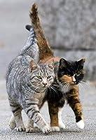 大人のための数字で描くDIYキャンバス油絵キットアクリル2匹のぶち猫3つのブラシとアクリル顔料のパターン-40x50cm