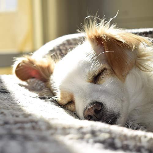 VITAZOO Premium Hundebürste, Hundehaarbürste, Softbürste, Fellbürste in schwarz für Hunde und Katzen mit 2 Jahren Zufriedenheitsgarantie - 4