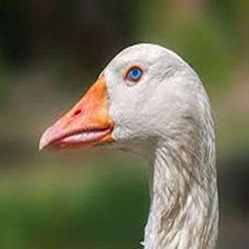 Goosewrld