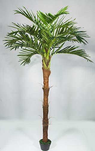 Seidenblumen Roß Phönixpalme mit Kokosstamm 220cm ZJ künstliche Palmen Kunstpalmen Kunstpflanzen Dekopalme