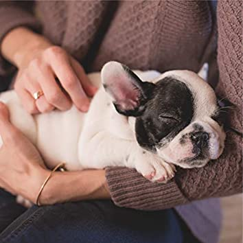 Caring Music | Mind Calmness For Dogs