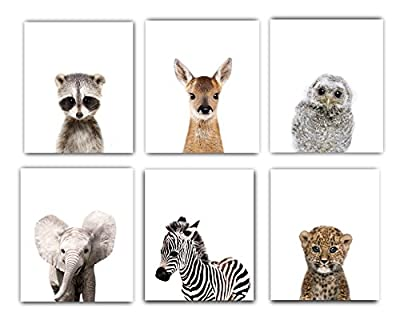 Designs by Maria Inc. Nursery Decor Pictures (8x10) | Set of 6 (Unframed) Cute Baby Animal Photography Wall Prints for Boys & Girls Room