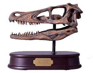 Velociraptor Skull, Dinosaur Polystone Statue, Scale 1/1 by Dinostoreus