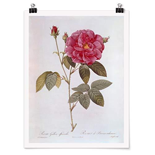 Bilderwelten Poster Wanddekoration Pierre Joseph Redouté - Apothekerrose Glänzend 100 x 75cm