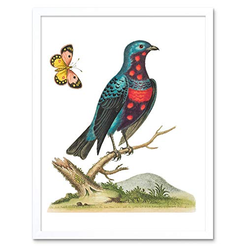 Vogel Blauw Gespot Kunst Print Ingelijste Poster Muurdecoratie 12X16 Inch