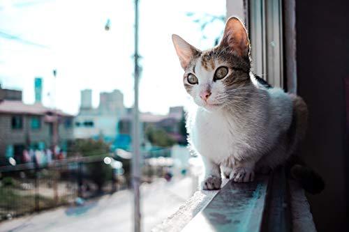 JRGGPO animale domestico-Gatto a Pelo Corto-Gatto Siamese 5D DIY Number Kit Kit di Ricamo Regali per adulti e Bambini Ricamo, Decorazione per Casa e Pareti(30x45cm Diamante Quadrato)
