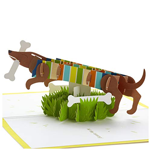Hallmark Signature Paper Wonder Pop Up Birthday Card, Fathers Day Card (Dachshund, Happy All Day Long)