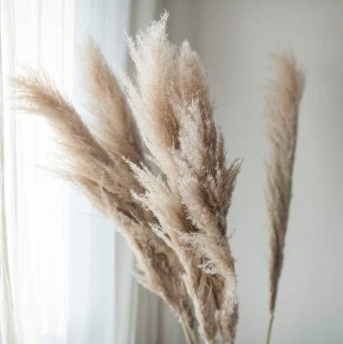 pah-macy Pampasgras, natürlich getrocknet - Plant Wedding Flower Bunch for Home Decorations vom Hochzeitstrend zum Interior-Liebling! (Naturfarben)-5 Zweige Schilf_Trockene Zweige