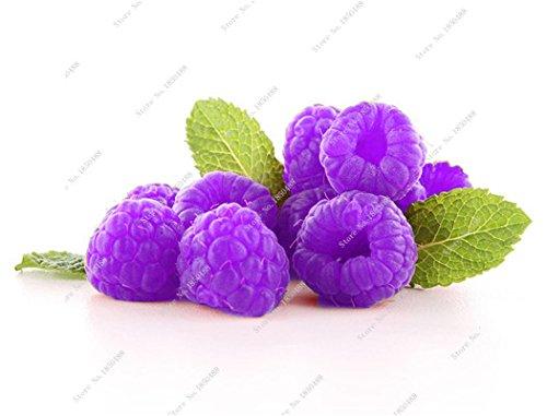 Bonsai framboise mûre graine noire Berry Blackberry vivace arbre plante délicieux fruits Succulent meilleur cadeau pour les enfants de 400 Pcs 16