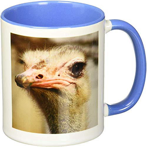 Silly Cute Ostrich Face Nature Animal Photo Two Tone Mug,Blue/White 11 oz