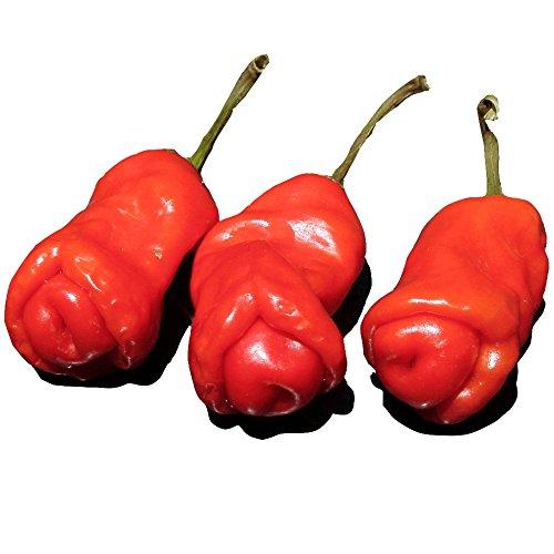 Wayland Chiles Peter Pepper Seeds (Mini)