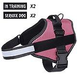 Harnais pour chien respirant sans traction réglable, Coffre d'aide à l'entraînement à la marche, Contrôle facile en extérieur pour les petits chiens de taille moyenne, Harnais pour chien rose