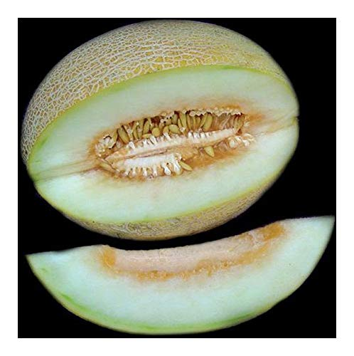 Ananas Melon - Ananas Melone - 10 Samen
