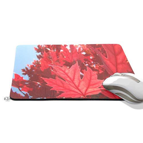 Grappige Muis Pad muizen pad Gepersonaliseerde Regenboog Eenhoorn Schilderij Rechthoek Vorm Nonslip Rubber Backing voor Office Computer Werk, 9.8