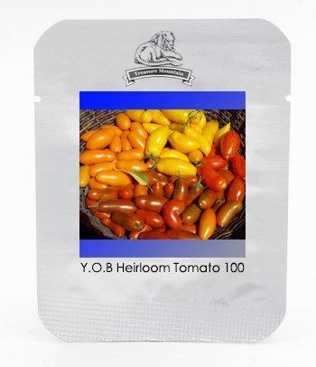 Roma Jaune Orange Brown de petite taille longue tomate semences hybrides, Paquet professionnel, 100 graines / Pack, Fruits comestibles non-ogm Tasty
