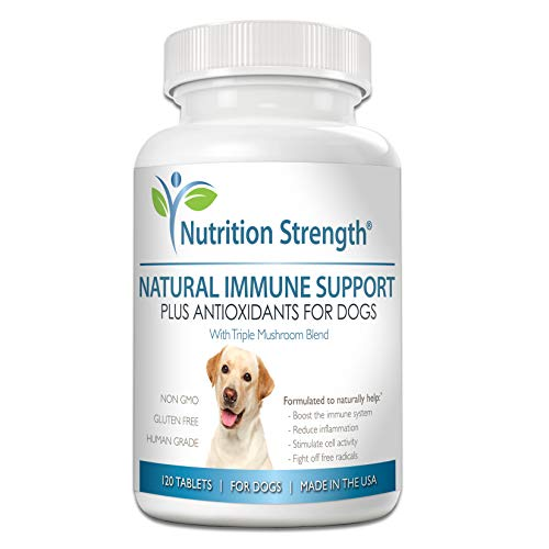 Top 10 best selling list for supplement for dogs with cancer