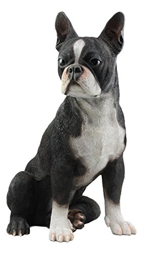 Ebros Large Lifelike Adorable Boston Terrier Dog Statue 16' Tall Fine Pedigree Dog Breed Collectible Decor with Glass Eyes