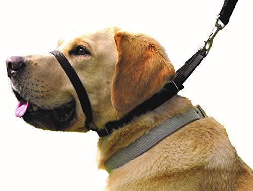 Canny Collar Halsband für Hunde, einfache und effektive Hilfe beim Hundetraining und verhindert das Ziehen von Hunden - Schwarz