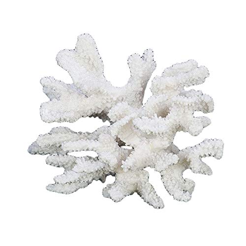Beachcombers SS-BCS-01032 Coral Centerpiece, White