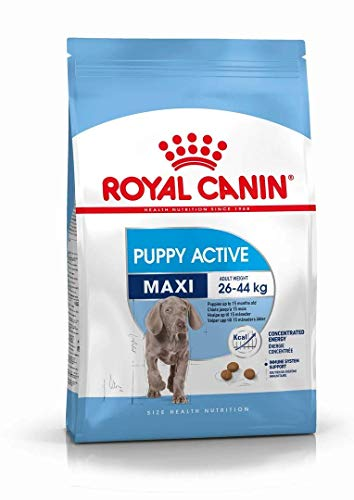 ROYAL CANIN Hundefutter Maxi Junior Active 15 kg, 1er Pack (1 x 15 kg)