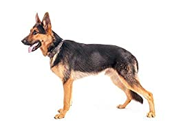 Beste Hundedecken