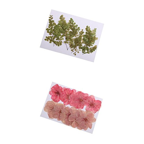 Fityle 20 Pieces Real Pressed/Dried Flower Cherry Blossom Adiantum Plant Embellishments for DIY Craft