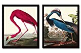 Audubon Birds Wall Art Print Set of 2 Prints...