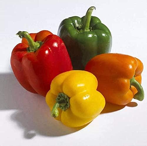 50 Pezzi Peperone dolce arcobaleno Semi Colore misto peperoncino dolce fresco semi di ortaggi piantagione all'aperto giardino semina varietà di raccolta autunnale