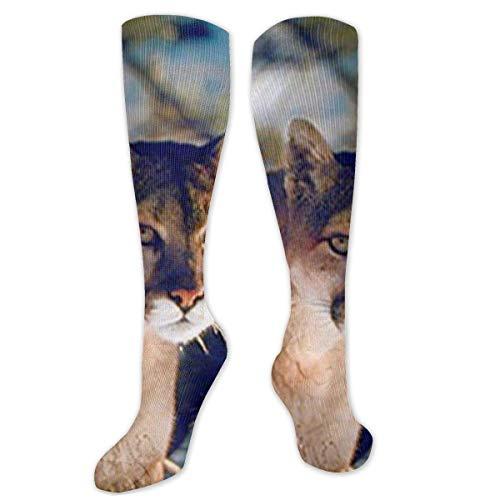 winterwang Wild Cougar in Snow Wildlife Mountain Lion Calcetines de compresin para mujeres y hombres - Best, Travel & Flight Calcetines