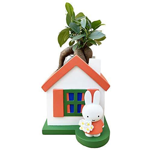 花のギフト社 ガジュマルの木 ガジュマル鉢植え 多幸の木 ガジュマル miffy ミッフィー 誕生日