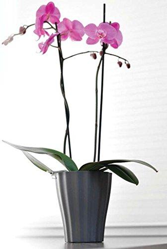 Haco Orchideentopf Orchideenübertopf Ola Ø 16cm, Farbe:Weiss