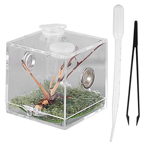 POPETPOP Reptilien Zuchtbox Transparente Insekten Fütterungsbox mit Künstlich Pflanze Deckel Pipette Zange für Spinne Skorpion Gecko Schlangenschildkröt