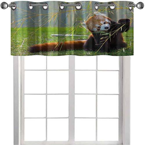 Cenefa de cocina, diseño de panda rojo en el campo jugando con ramas de bambú montañas nativas del Himalaya, 91.44 cm de ancho x 45.72 cm de largo cortinas para ventanas, color marrón y rojo
