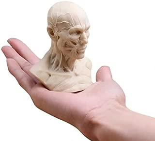 BoNew-Oral Human Model Anatomy Skull Head Muscle Bone Medical Art For The School