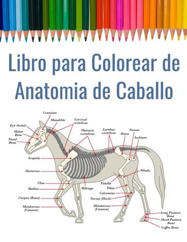 Libro para Colorear de Anatomia de Caballo: Cuaderno de Anatomía Equina para Colorear | Anatomía Veterinaria, incluye pie y dentición | Regalo para Estudiantes de la Escuela de Veterinaria
