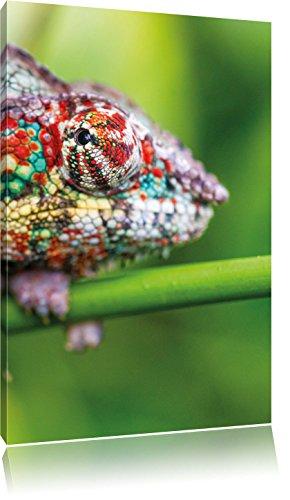 kleurrijke PantherchamäleonFoto Canvas | Maat: 80x60 cm | Wanddecoraties | Kunstdruk | Volledig gemonteerd