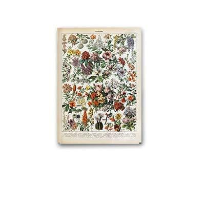 JXMK Planta paleontológica Cartel Retro Flor Animal Insecto Mariposa Seta Lienzo Pintura Arte de la Pared Lienzo Pintura al óleo decoración del hogar 40x50 cm