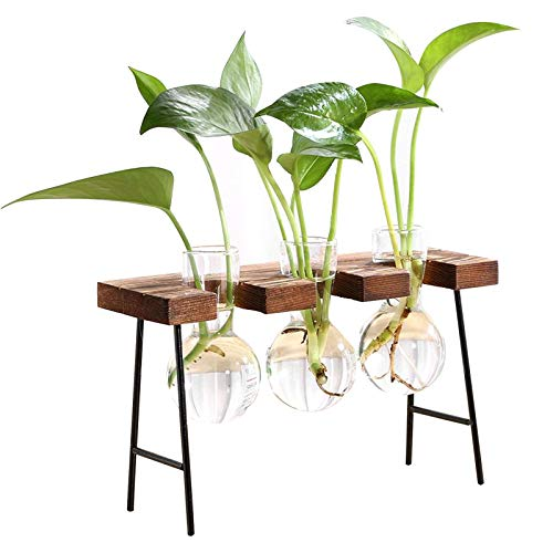 panthem Hydroponics Glasvase, Nordic Desktop Hydroponic Container mit Holz Eisenständer, Pflanzen Terrarium Schreibtisch Glas Pflanzer Birne für Hydroponics Pflanzen Gartendekoration(3 Vases)
