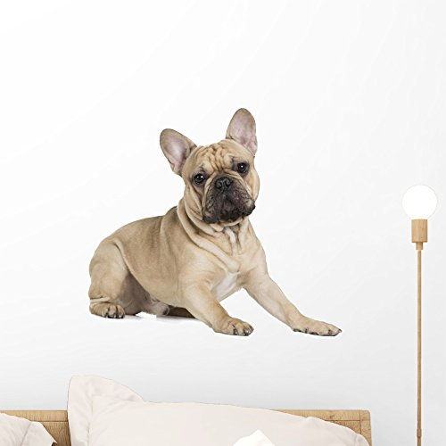 Wallmonkeys French Bulldog Fawn Color Wall Decal Peel and Stick Graphic (18 in W x 16 in H) WM359461