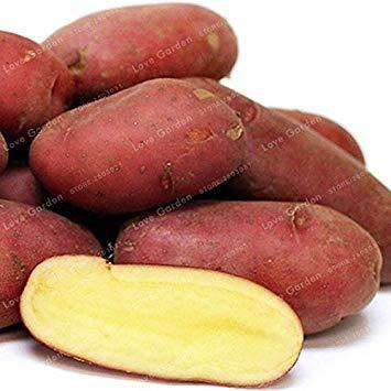 . 100 Pcs Pommes de Terre légumes Bio Fruits Doux Cuisine Saine Cuisson des Aliments Jardin des Plantes OGM NO: 2