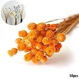 Acerca de 50pcs Decoración Natural secas Ramo de Flores Decorativas Flores secas para el Partido decoración de la Boda en florero fotografía apoya la Naranja