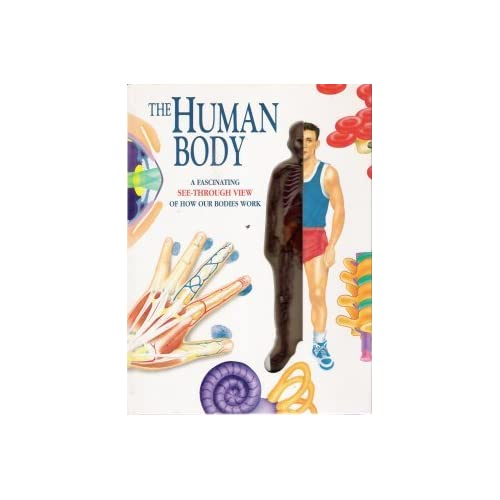 The Human Body: A Fascinating See-Through View of How Our Bodies Work
