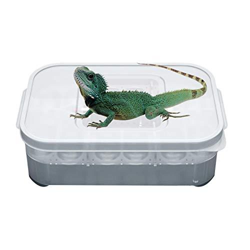 tidystore Incubadora para reptiles, incubadora para huevos de reptiles